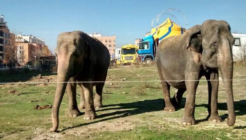 Elefantescirco