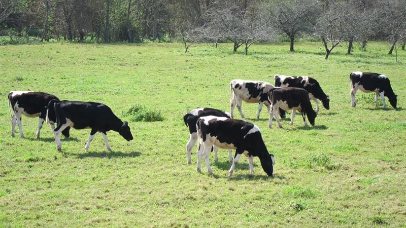 Vacaslechelacteo