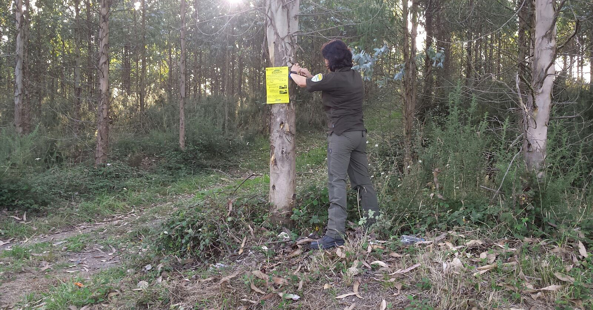 Arboles distancia agente forestal