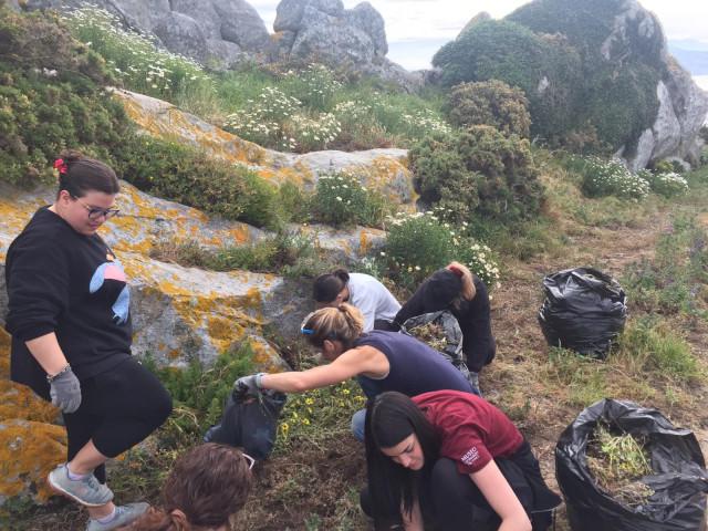 Una treintena de voluntarios retiran de las islas Cíes y Ons más de 1.400 kilos de plantas invasoras