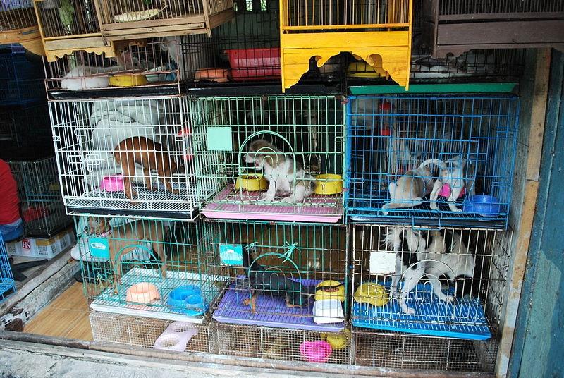 Animales en venta