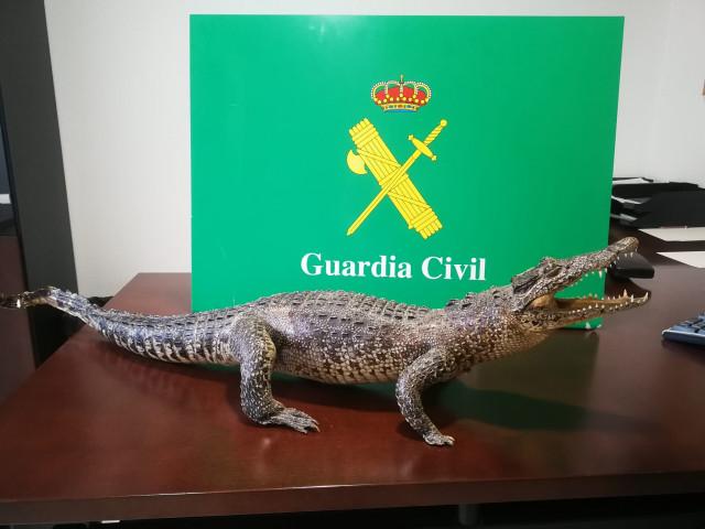 La Guardia Civil impide la venta por Internet de un cocodriño disecado