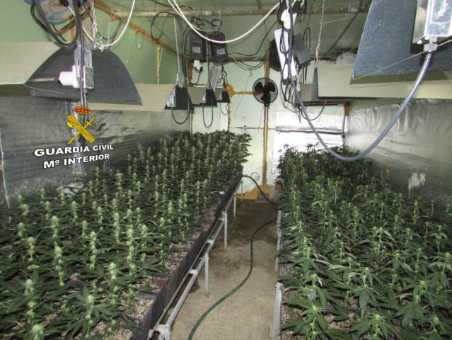 Plantación de marihuana descubierta tras un incendio en un alpendre en Vila de Cruces (Pontevedra).